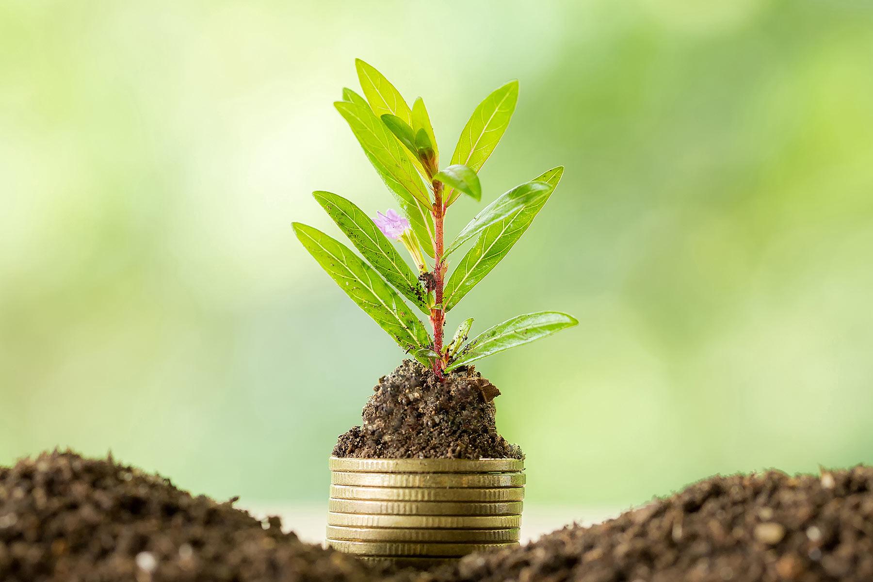 Економіка та екологія: врятувати одне, не знищивши інше